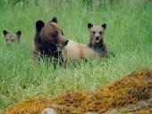 bc-bears3