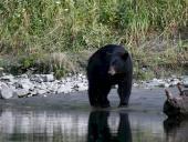 bc-bears5